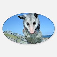 Virginia Opossum Sticker (Oval)