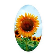 journal_daydreaming Oval Car Magnet