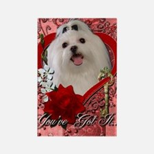 Valentine_Red_Rose_Maltese Rectangle Magnet