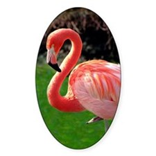 (13) Flamingo Neck Decal