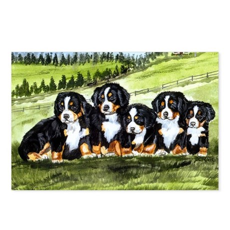 berner farm pups Postcards (Package of 8)