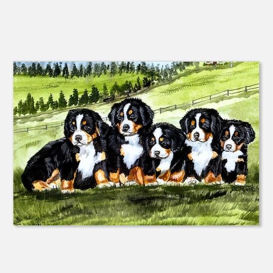 berner farm pups Postcards (Package of 8)