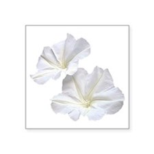 "White Morning Glory Square Sticker 3"" x 3"""