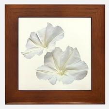 White Morning Glory Framed Tile