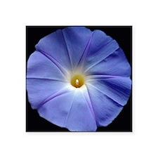 "Blue Morning Glory Tile Square Sticker 3"" x 3"""