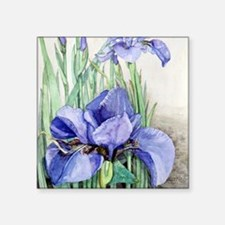 "Purple Iris Square Sticker 3"" x 3"""