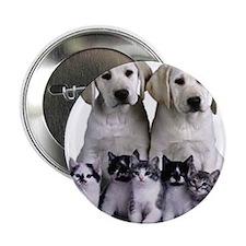 """392080-love_puppies_kittens_around_or 2.25"""" Button"""