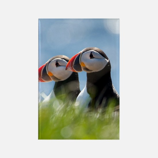 Puffin Pair 7.355x9.45 Rectangle Magnet