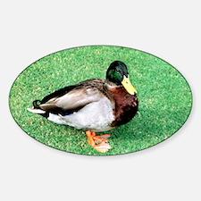 Duck Note Card Sticker (Oval)