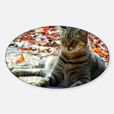 gorgeous brown tabby Sticker (Oval)