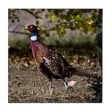 (15) Pheasant  497 Tile Coaster