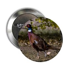 "(15) Pheasant  497 2.25"" Button"