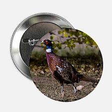 "(15) Pheasant  497 2.25"" Button"