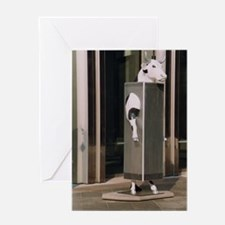 WTC SOLO cow 73Slider Greeting Card