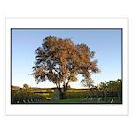 lone autumn oak, vineyard small posters