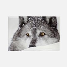 wolf ms Rectangle Magnet