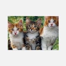 Tthree_kittens 16x16 Rectangle Magnet