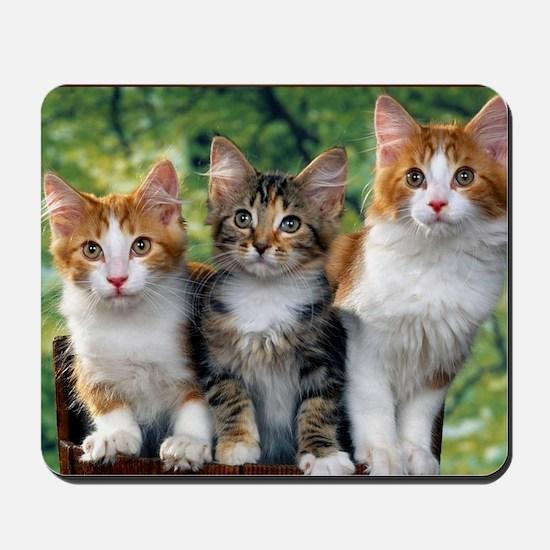 Tthree_kittens 16x16 Mousepad