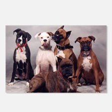 five boxers16x16 Postcards (Package of 8)