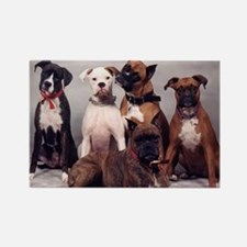 five boxers16x16 Rectangle Magnet