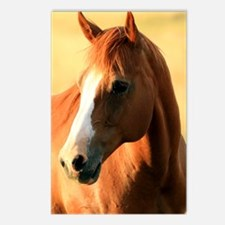 horse,1 Portrait Postcards (Package of 8)