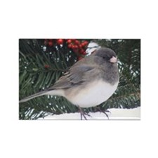 Junco with Berries Rectangle Magnet