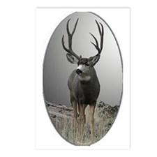 Tall antler buck Postcards (Package of 8)