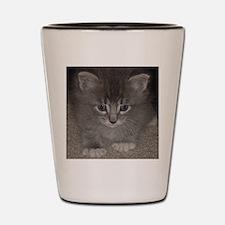 Blue tabby kitten3 Shot Glass