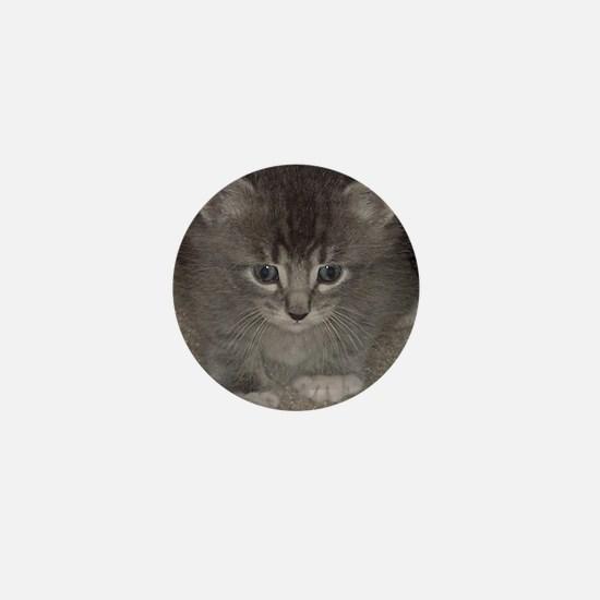 Blue tabby kitten3 Mini Button