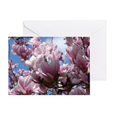 Saucer Magnolias Greeting Card