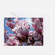 Saucer Magnolias Greeting Card