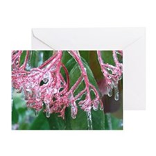 Pink Freeze Greeting Card