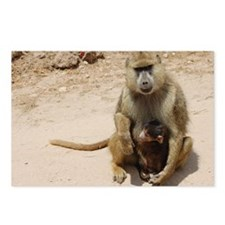 Baboon Postcards (Package of 8)