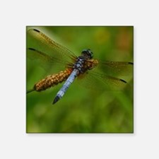 """Dragonfly #142 Square Sticker 3"""" x 3"""""""