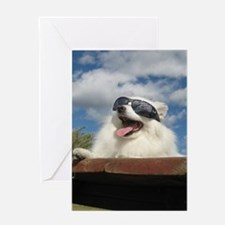 American Eskimo Dog Greeting Card