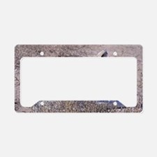 mexican-wolf License Plate Holder