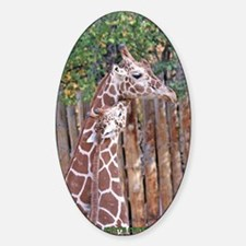 giraffe-cuddle Sticker (Oval)
