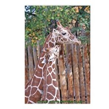 giraffe-cuddle Postcards (Package of 8)