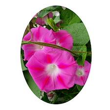 morning-glory-vcard038 Oval Ornament