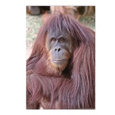 orangutan-tranquility-1 Postcards (Package of 8)