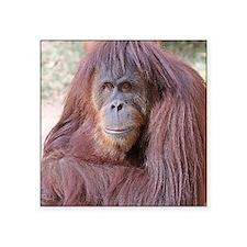 "orangutan-tranquility-1 Square Sticker 3"" x 3"""