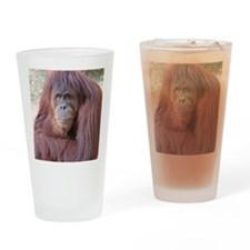 orangutan-tranquility-1 Drinking Glass