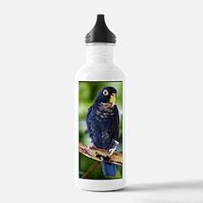buds Water Bottle