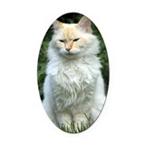 Kitty Oval Car Magnets
