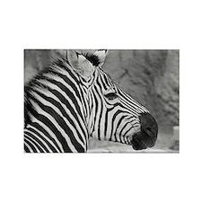 Zebra In Black And White Rectangle Magnet