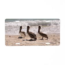 Pelicans in Florida Aluminum License Plate
