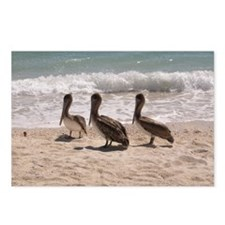 Pelicans in Florida Postcards (Package of 8)