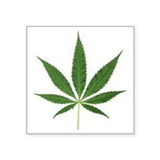 "Pot Leaf Square Sticker 3"" x 3"""