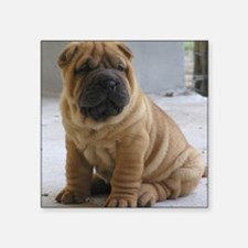 "LaurensSharpei Square Sticker 3"" x 3"""