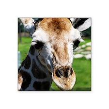 "Giraff Square Sticker 3"" x 3"""